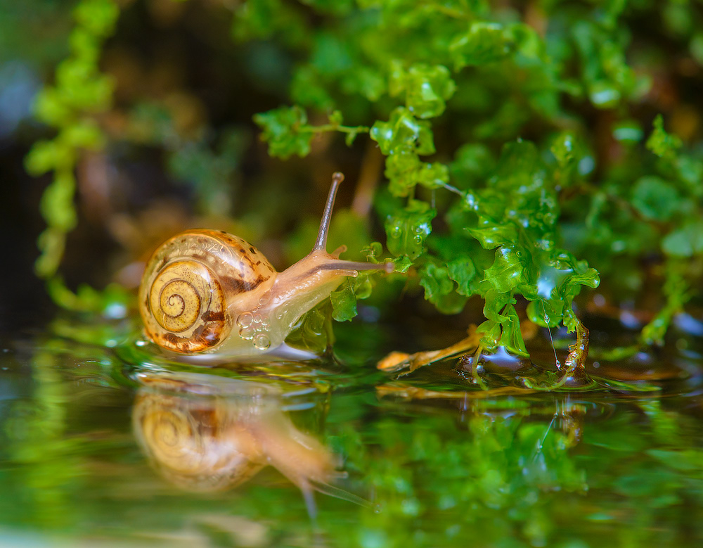 snails-when-there-is-no-hurry-04