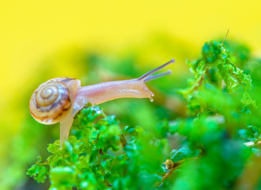 snails-when-there-is-no-hurry-07