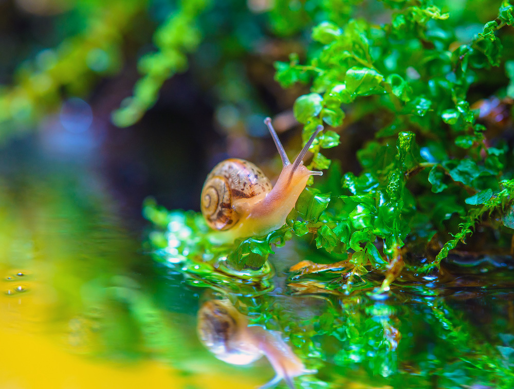snails-when-there-is-no-hurry-08