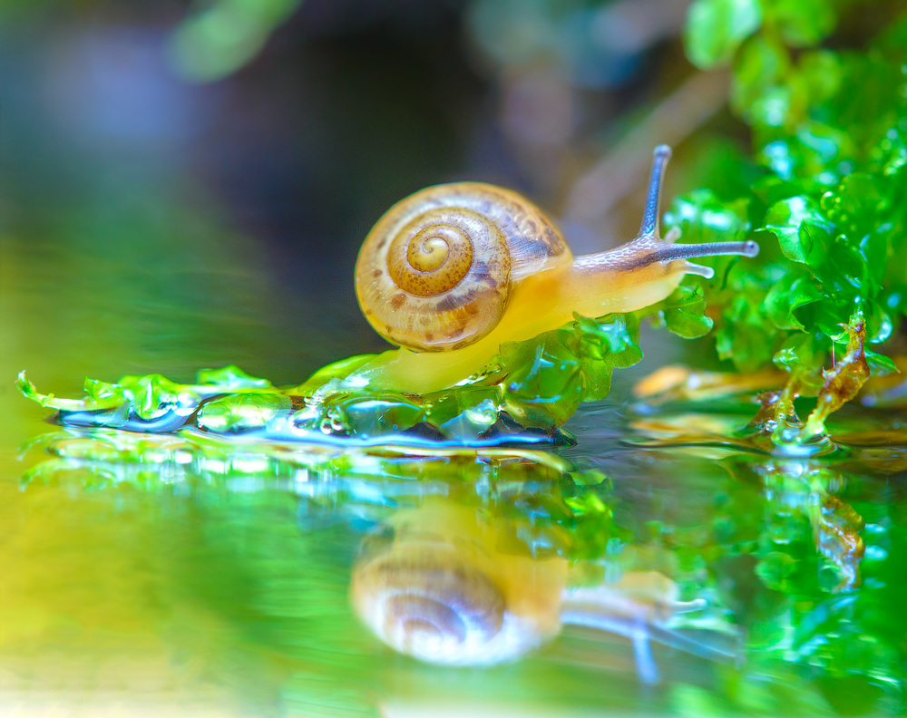 snails-when-there-is-no-hurry-12