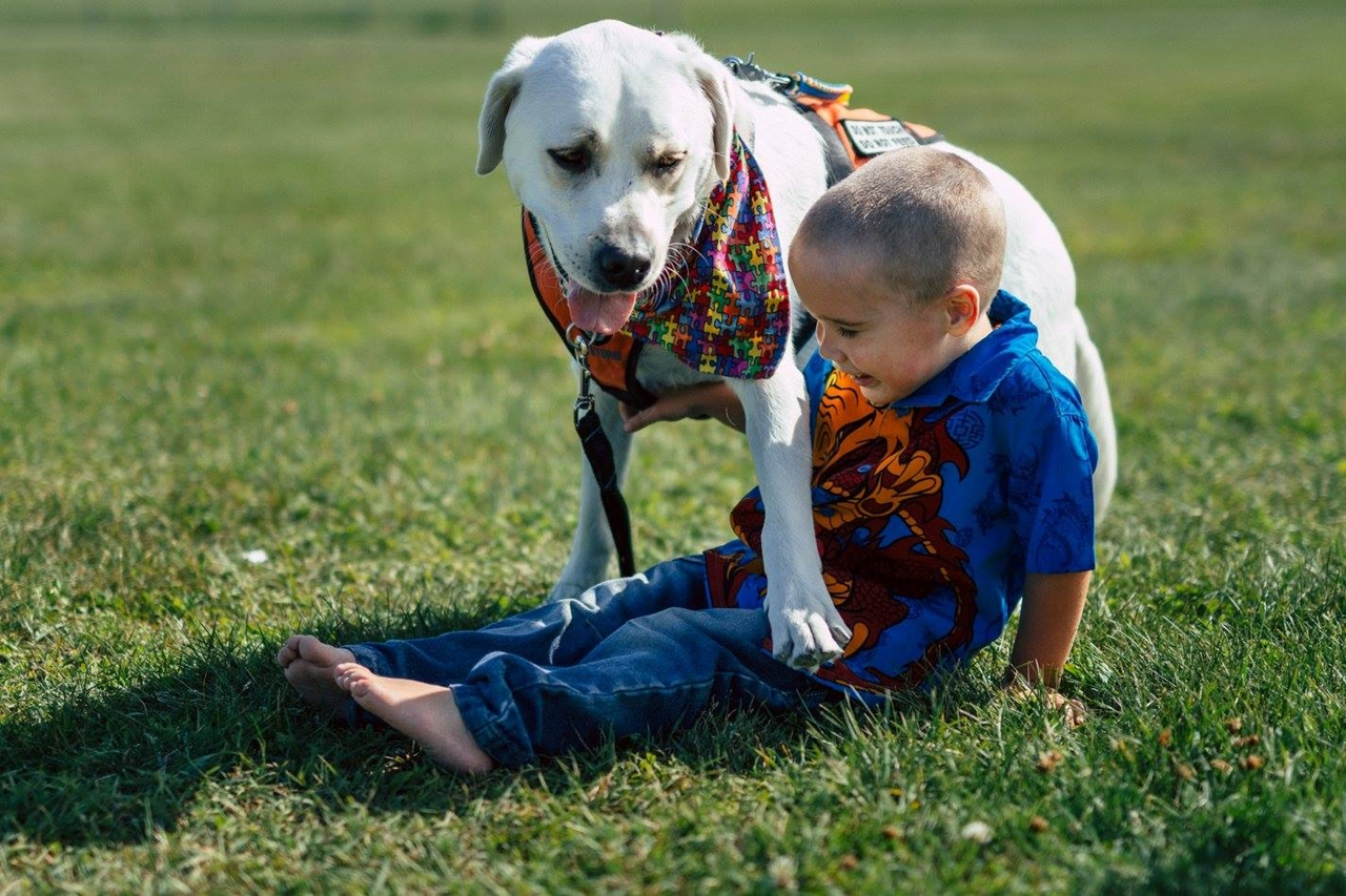 the-labrador-retriever-helps-boy-with-autism-to-cope-with-the-problems-0