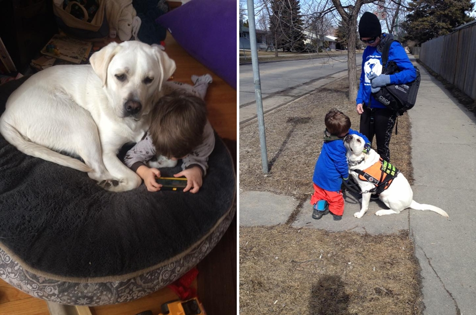 the-labrador-retriever-helps-boy-with-autism-to-cope-with-the-problems-05