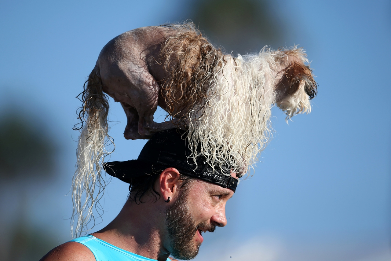 the-annual-competition-dog-surfing-in-california-06