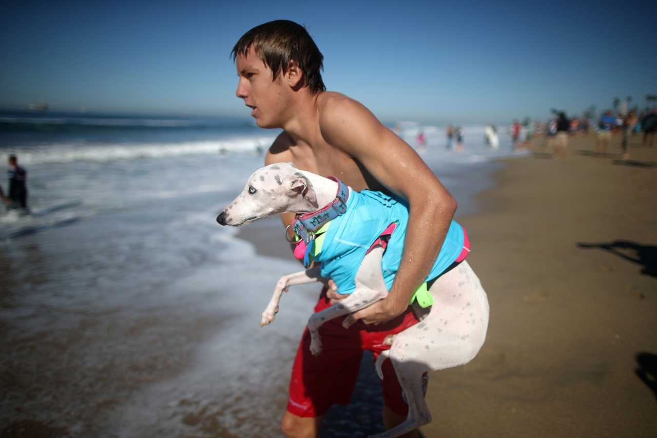 the-annual-competition-dog-surfing-in-california-08