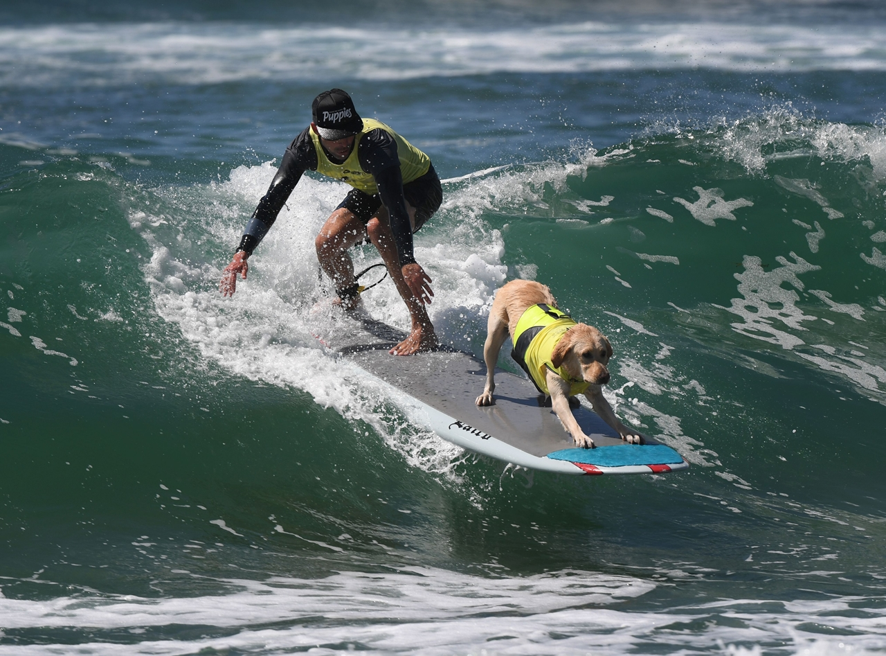the-annual-competition-dog-surfing-in-california-16