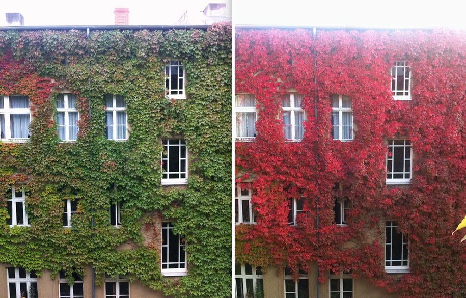 the-magic-of-autumn-before-and-after-07