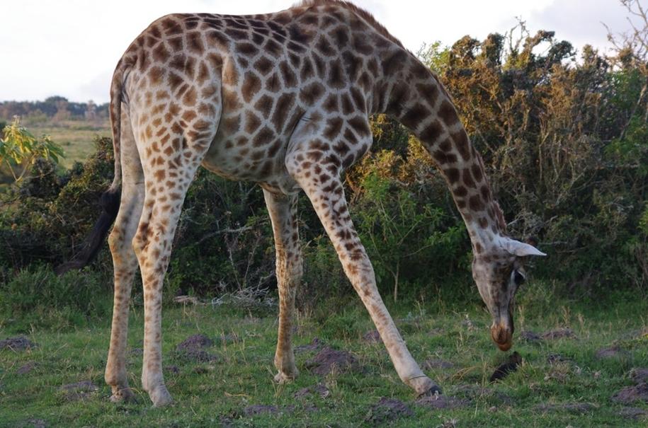 the-oddest-couple-of-friends-a-giraffe-and-a-rabbit-03