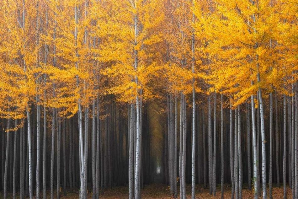 the-stunning-beauty-of-autumn-in-different-parts-of-the-world-07