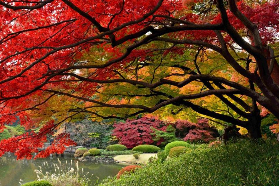 the-stunning-beauty-of-autumn-in-different-parts-of-the-world-21