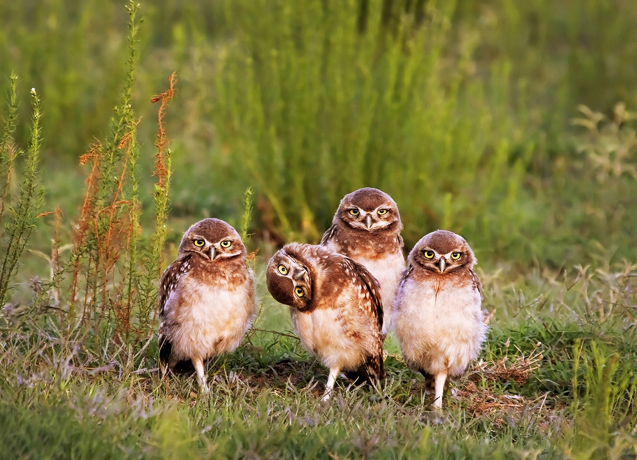 unusual-comedy-contest-wildlife-photography-awards-2016_18