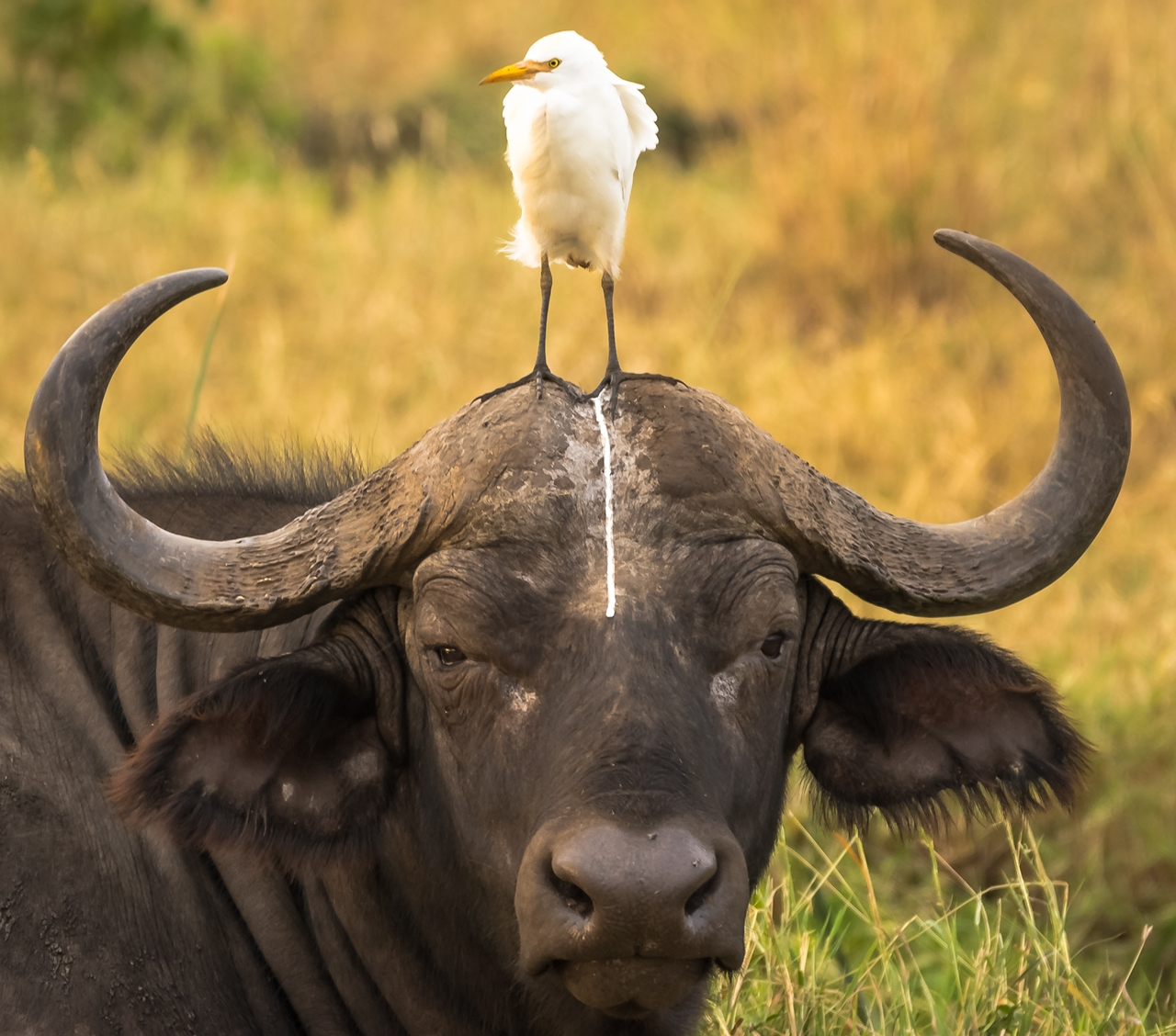 unusual-comedy-contest-wildlife-photography-awards-2016_21