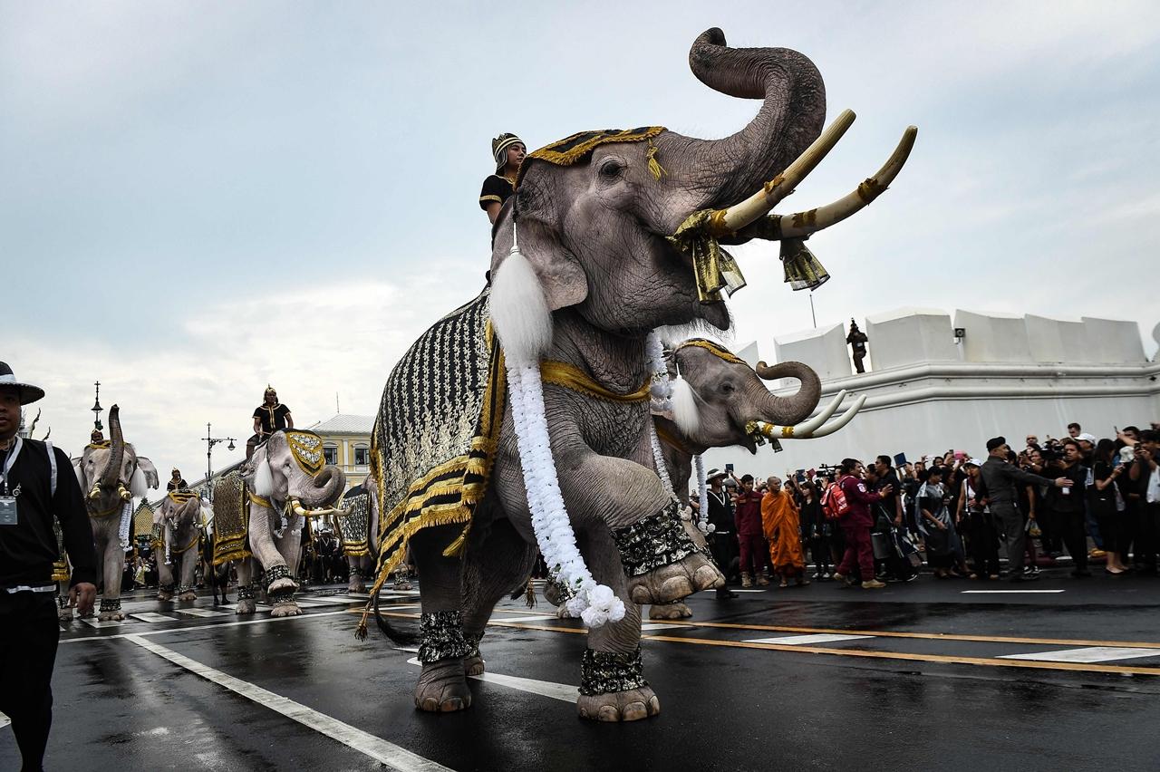 11 слонов почтили память тайского короля