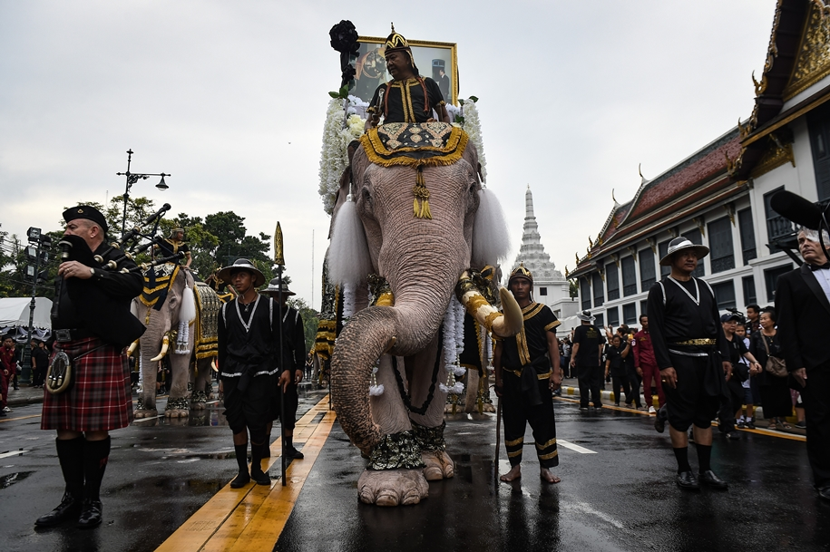 11-elephants-tribute-to-the-thai-king-01