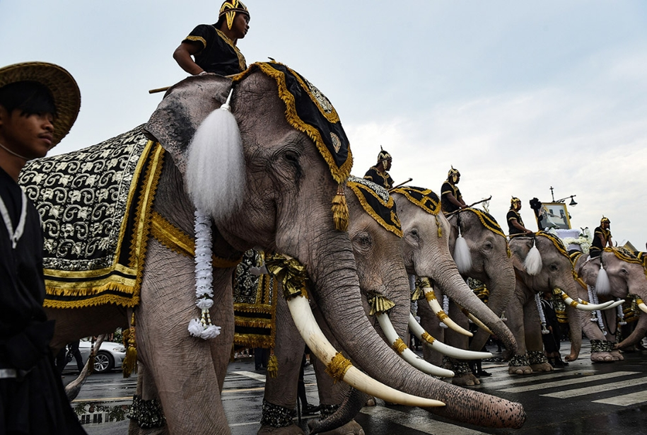 11-elephants-tribute-to-the-thai-king-02