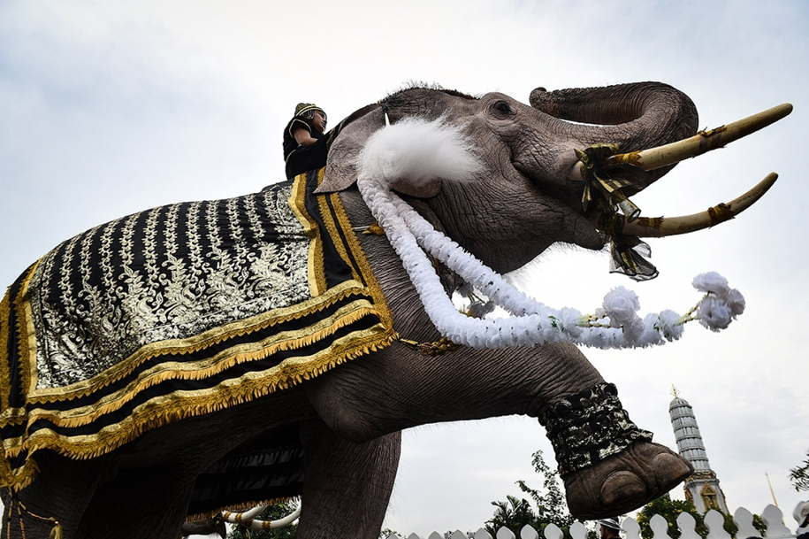 11-elephants-tribute-to-the-thai-king-04
