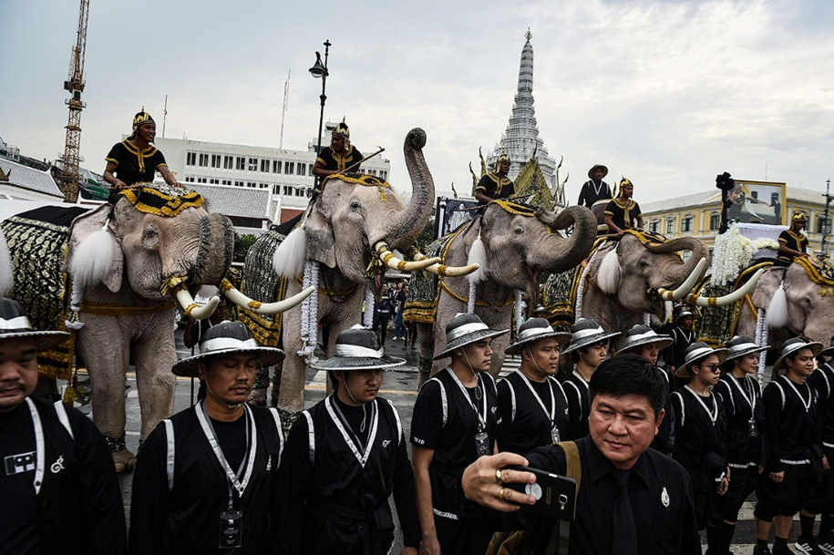 11-elephants-tribute-to-the-thai-king-05