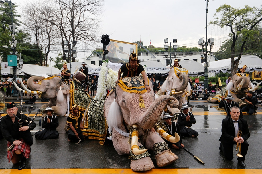 11-elephants-tribute-to-the-thai-king-08