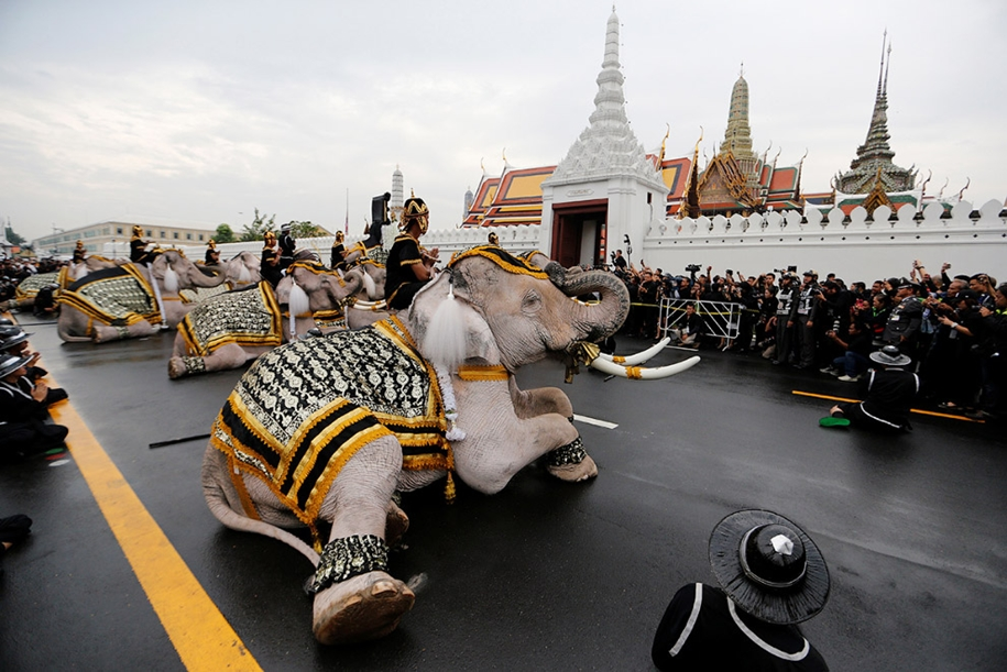 11-elephants-tribute-to-the-thai-king-09