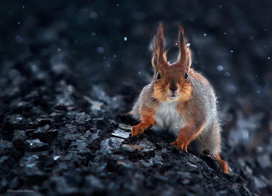 amazing-portraits-of-animals-by-sergey-polyushko-03