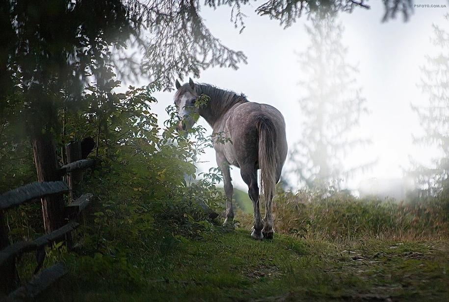 amazing-portraits-of-animals-by-sergey-polyushko-04