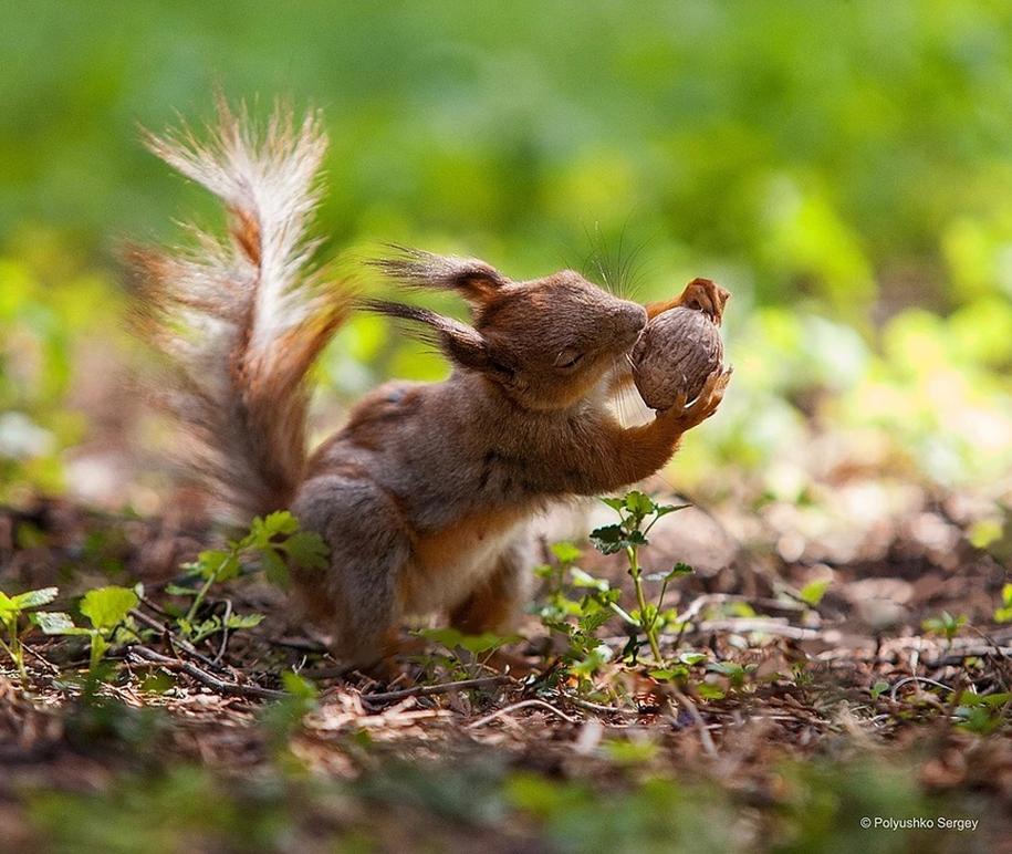 amazing-portraits-of-animals-by-sergey-polyushko-05