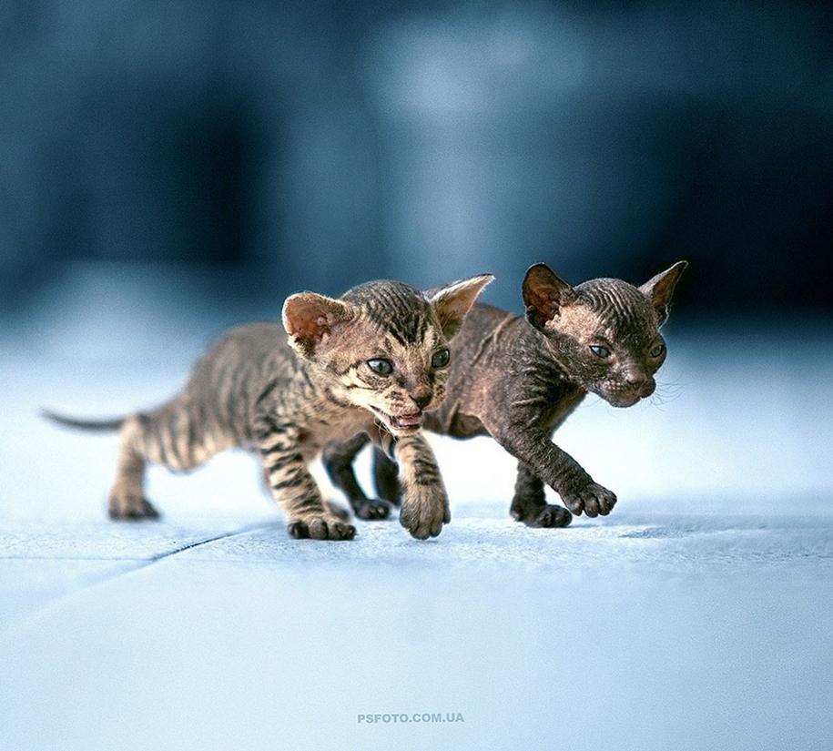 amazing-portraits-of-animals-by-sergey-polyushko-08