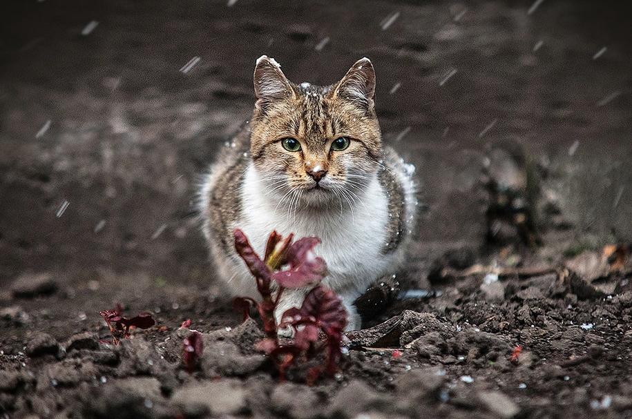 amazing-portraits-of-animals-by-sergey-polyushko-10