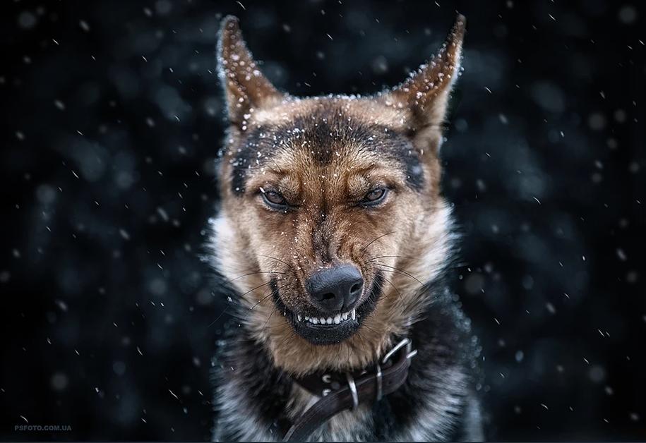 amazing-portraits-of-animals-by-sergey-polyushko-12