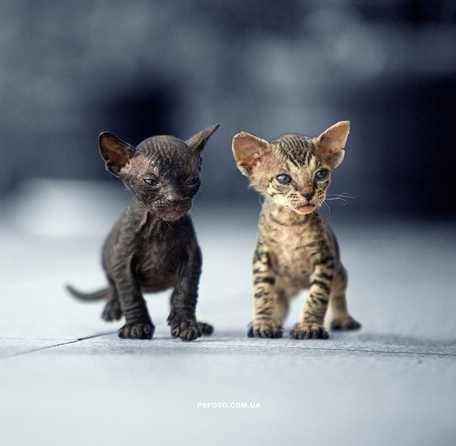 amazing-portraits-of-animals-by-sergey-polyushko-14