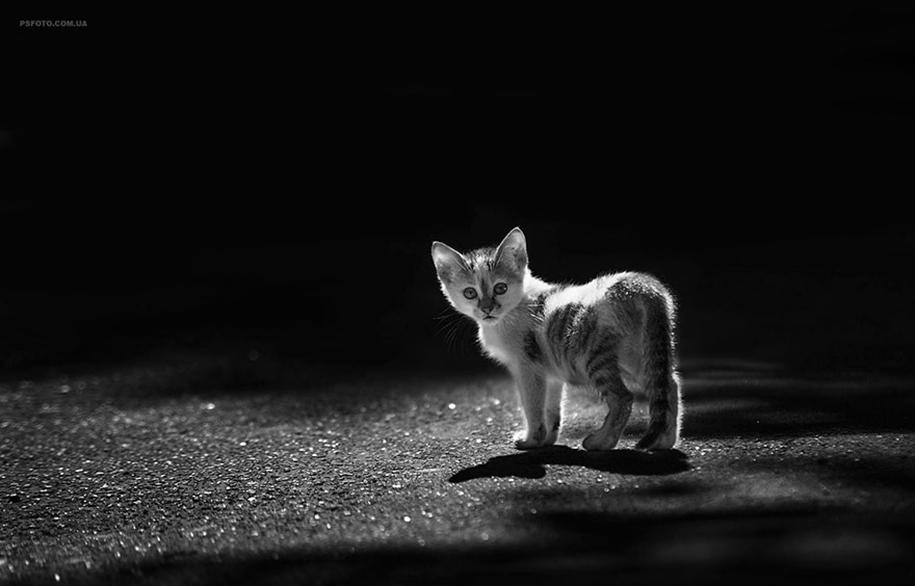 amazing-portraits-of-animals-by-sergey-polyushko-15