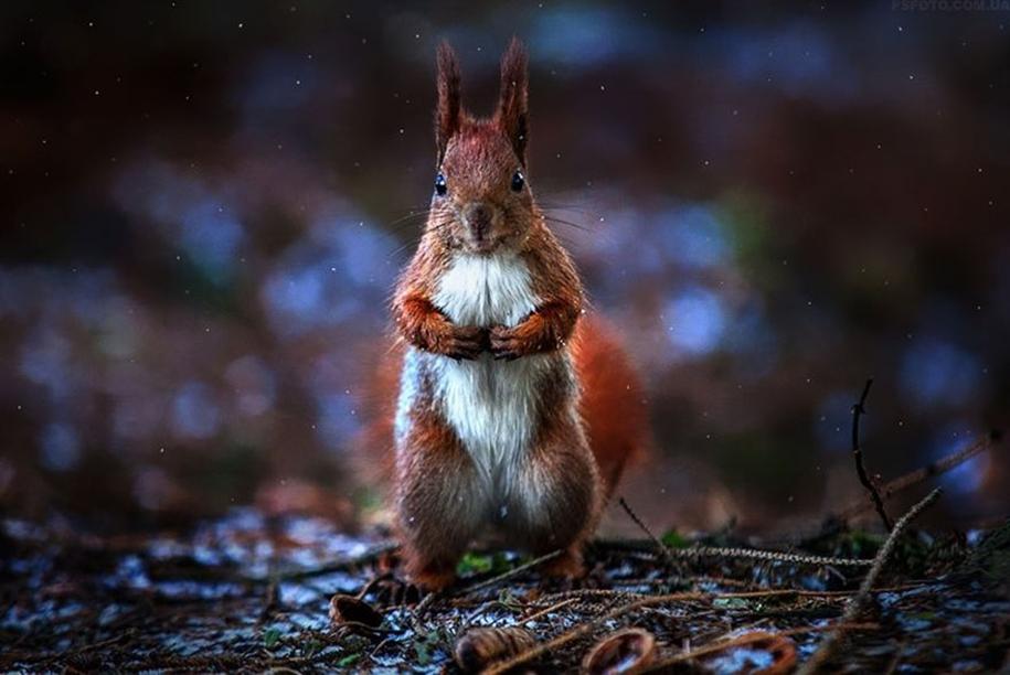 amazing-portraits-of-animals-by-sergey-polyushko-17