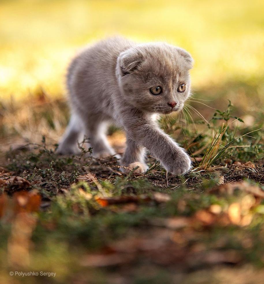 amazing-portraits-of-animals-by-sergey-polyushko-19