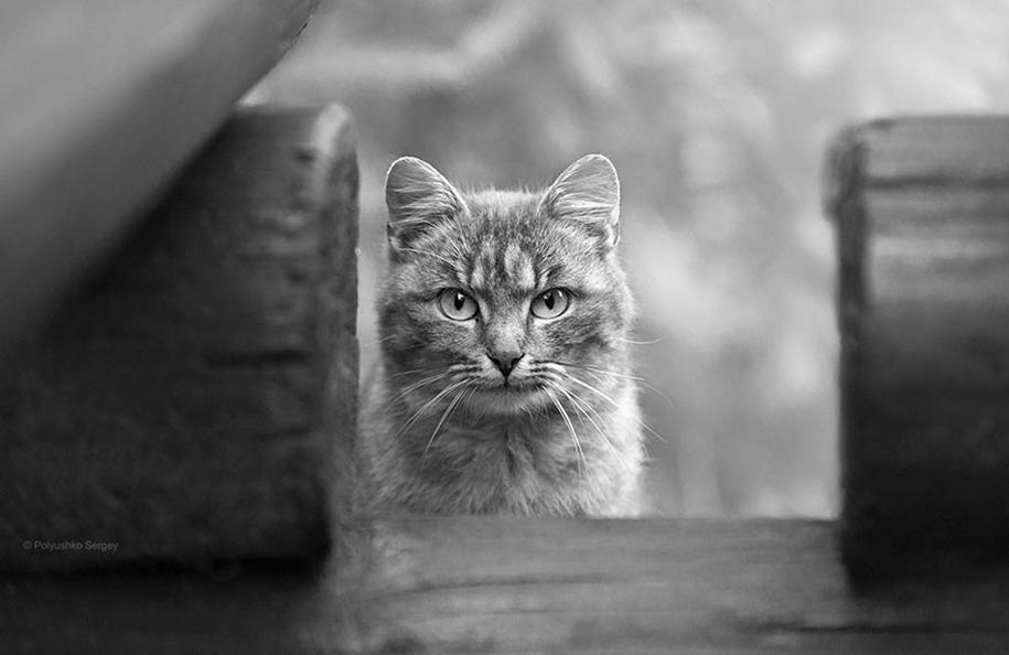 amazing-portraits-of-animals-by-sergey-polyushko-20