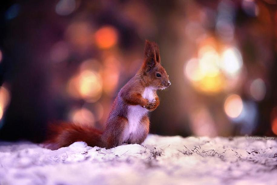 amazing-portraits-of-animals-by-sergey-polyushko-21