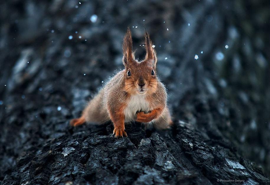 amazing-portraits-of-animals-by-sergey-polyushko-22