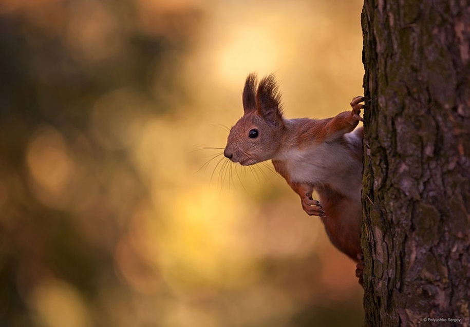 amazing-portraits-of-animals-by-sergey-polyushko-24
