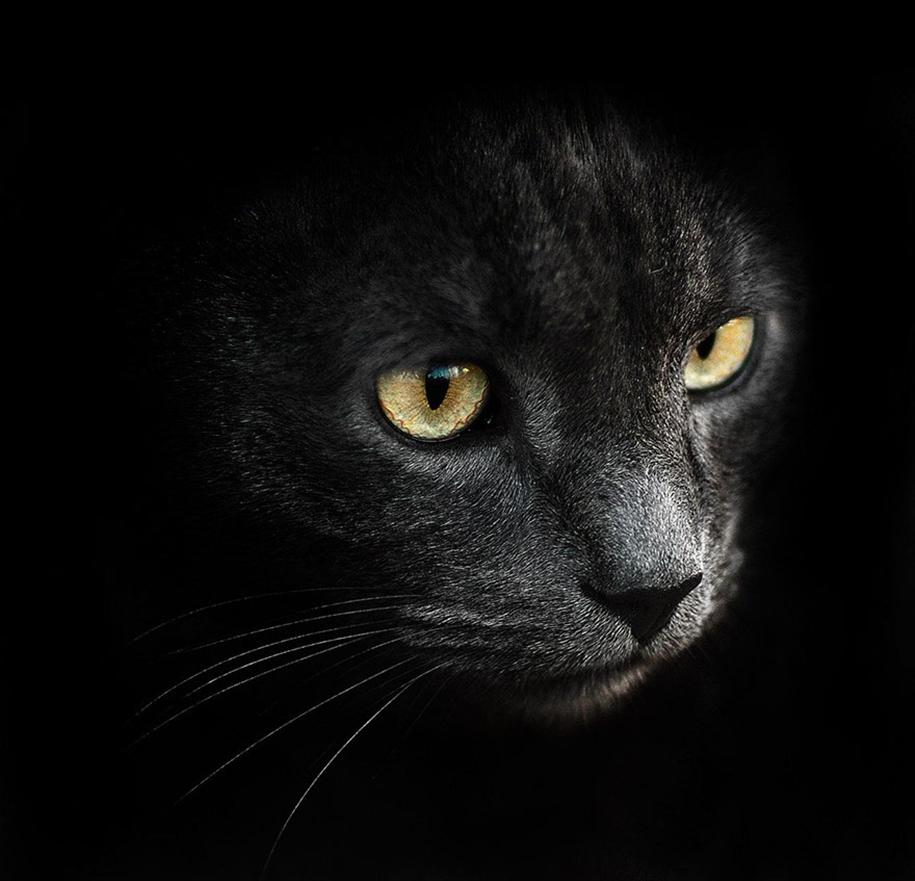 amazing-portraits-of-animals-by-sergey-polyushko-26