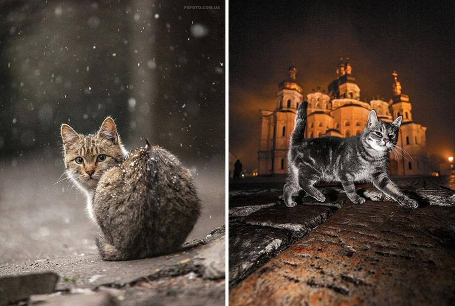 amazing-portraits-of-animals-by-sergey-polyushko-30