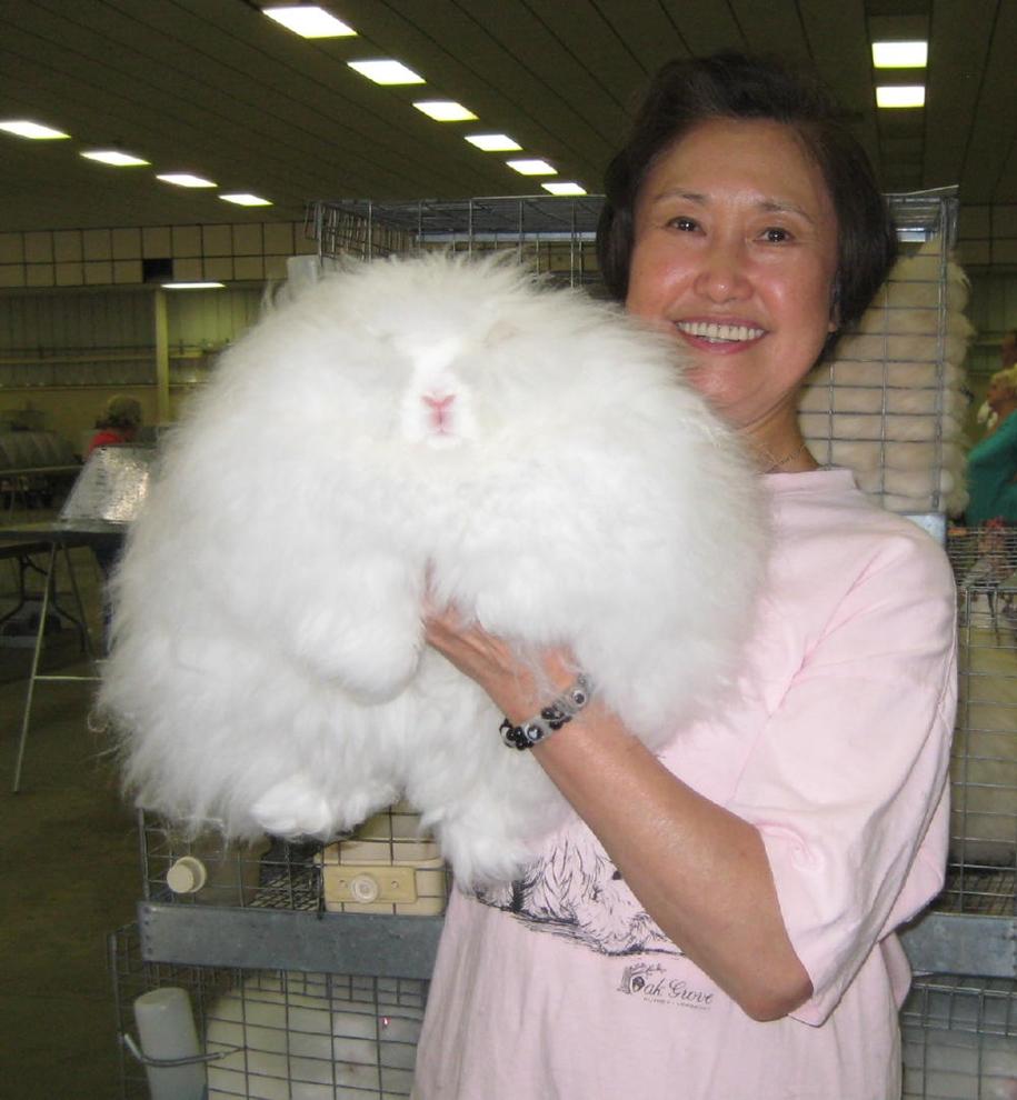 angora-rabbit-20