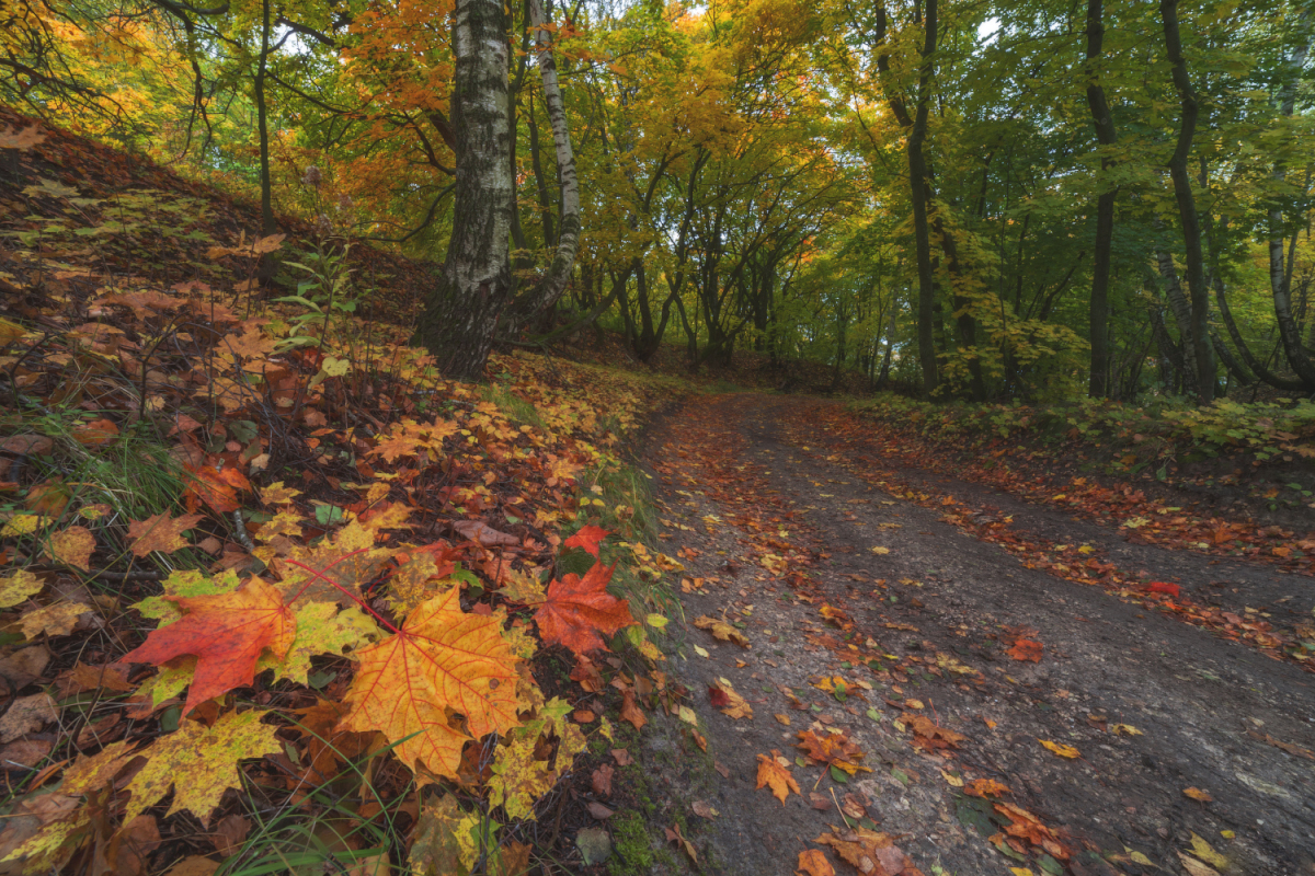 autumn-colours-in-the-scenery-of-the-ryazan-region-07