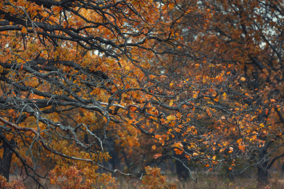 autumn-colours-in-the-scenery-of-the-ryazan-region-08
