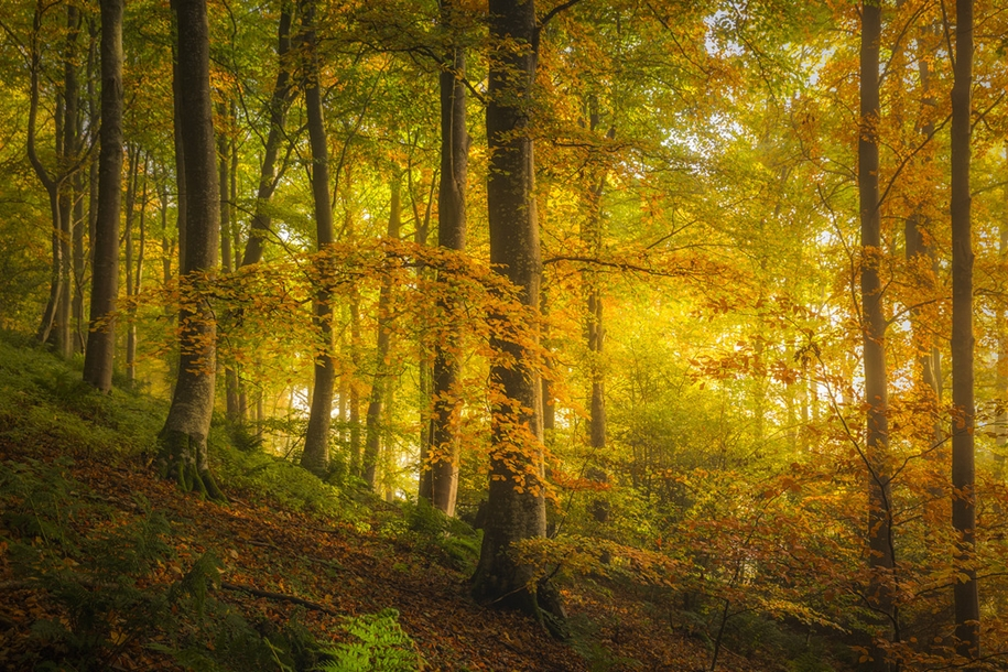 autumn-tale-in-the-lake-district-of-england-05