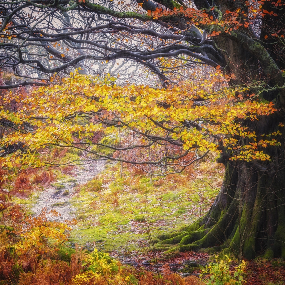 autumn-tale-in-the-lake-district-of-england-06