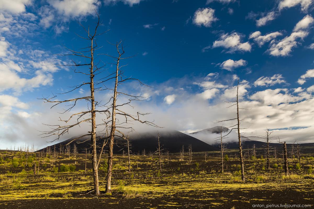 dead-forest-tolbachik-02