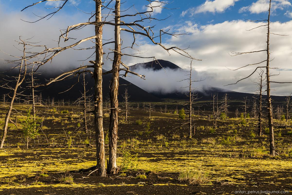 dead-forest-tolbachik-03