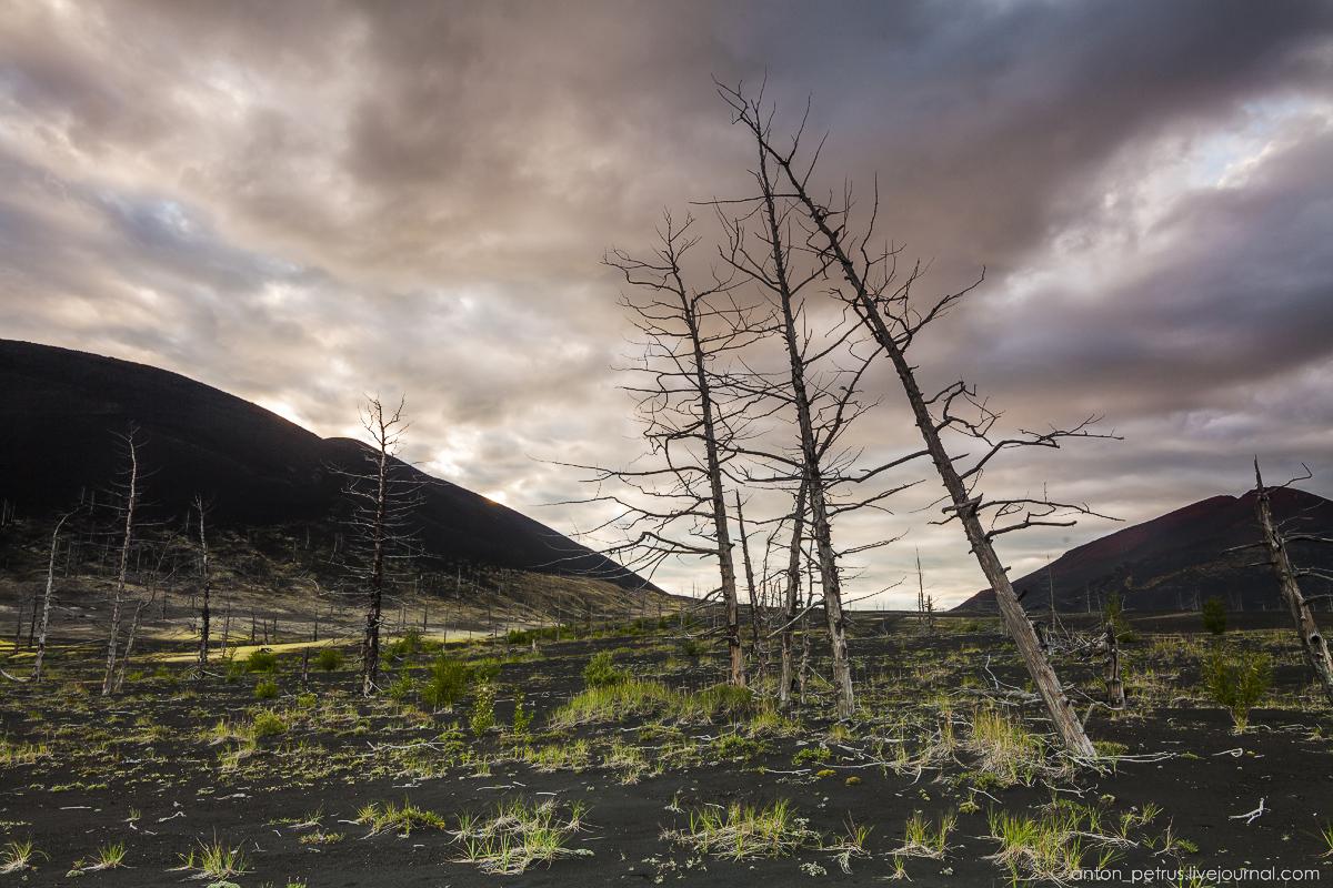dead-forest-tolbachik-04
