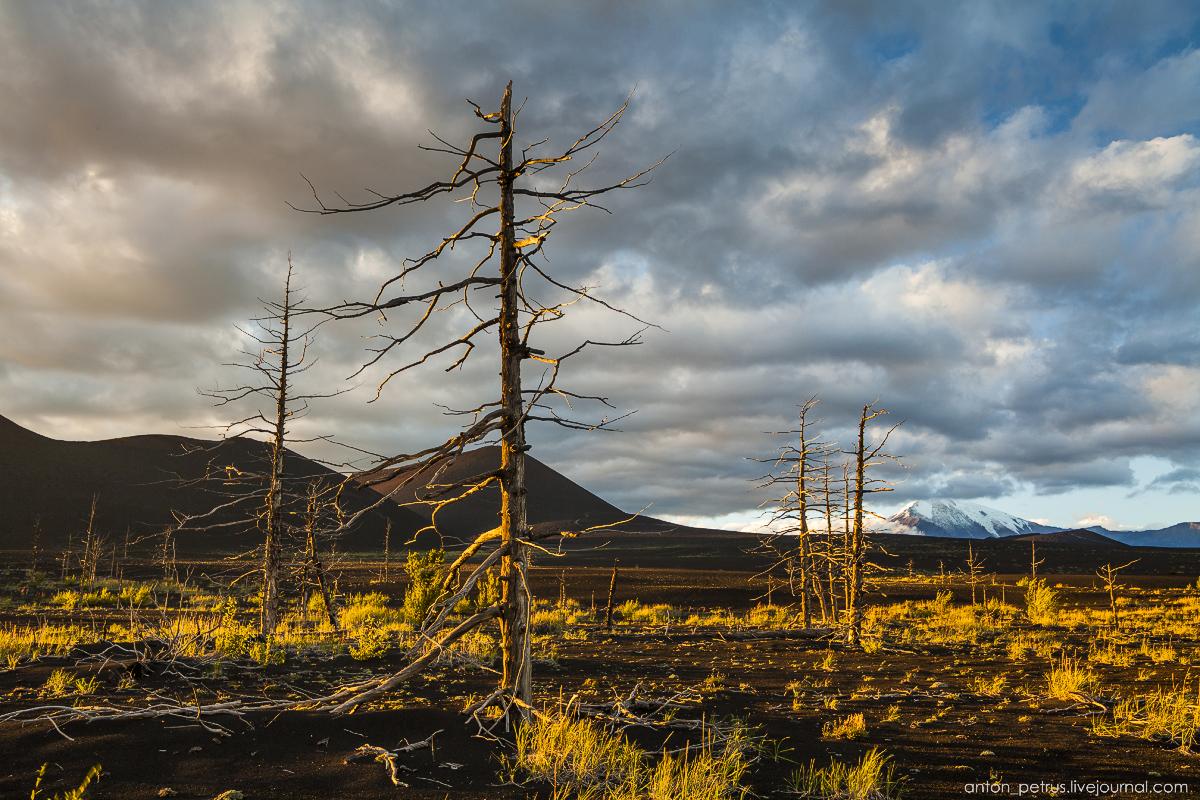 dead-forest-tolbachik-07