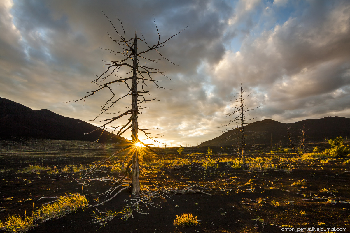 dead-forest-tolbachik-08