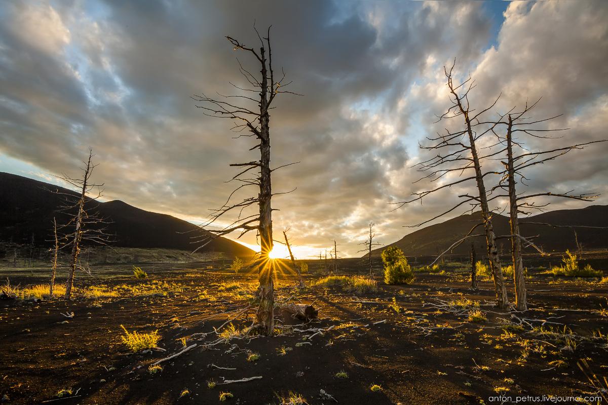 dead-forest-tolbachik-09