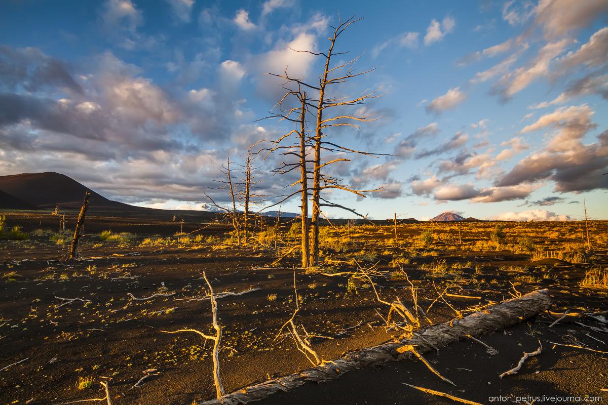 dead-forest-tolbachik-10
